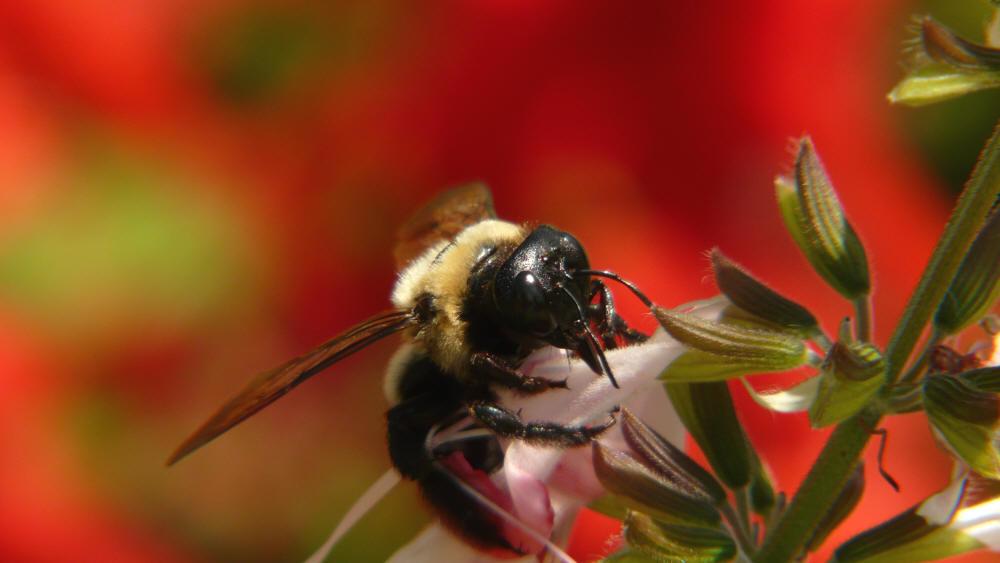 O Bee Wand I N S E C T W O...